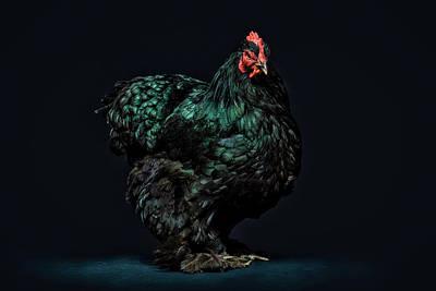 Chicken Portrait Art Prints