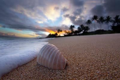 Designs Similar to Foam Shell Surprise