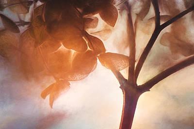 Dried Hydrangeas Art