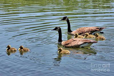 Designs Similar to Goslings Go For A Swim