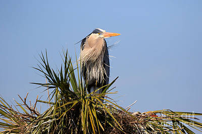 Designs Similar to Great Blue Heron On Nest
