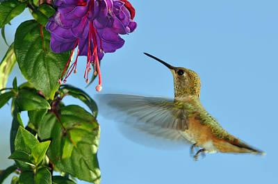 Hummingbird Feeder Photographs