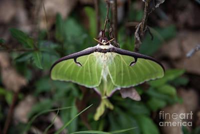 Designs Similar to Luna Moth by Anita Faye