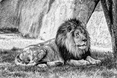 Animal Portraiture Photographs