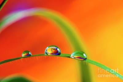 Designs Similar to Morning Dewdrops