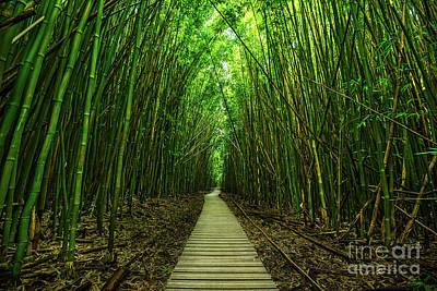 Bamboos Art