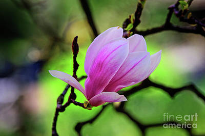 Designs Similar to Pink Spring by Anna Serebryanik