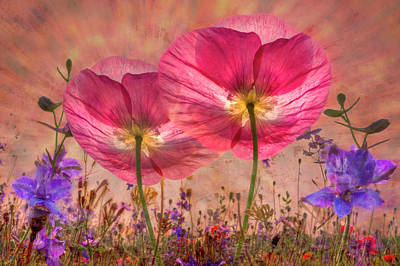 Pretty Pink Poppy Macro Art
