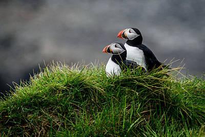 Birds Nest Photographs