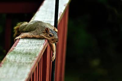Bryants Fox Squirrel Photographs