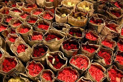 Rose Photographs
