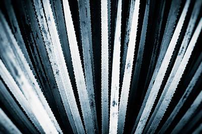 Yucca Plants Photographs