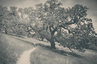 Walking Trails Prints