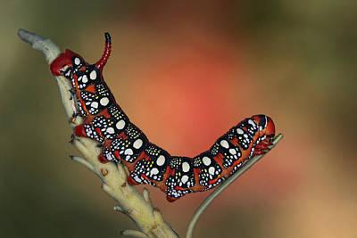 Caterpillar Art Prints