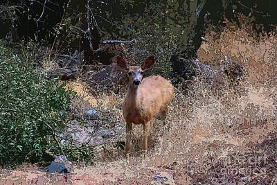 Designs Similar to Startled Deer