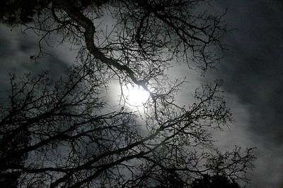 Winter Light Through The Trees Prints