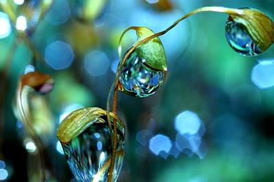 Water Droplets: Sharon Johnstone - Wall Art