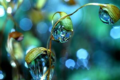 Water Droplets: Sharon Johnstone
