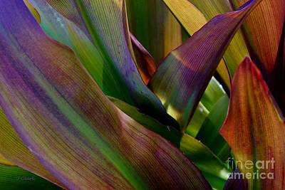 Designs Similar to Tropical Leaves 1 by John Clark