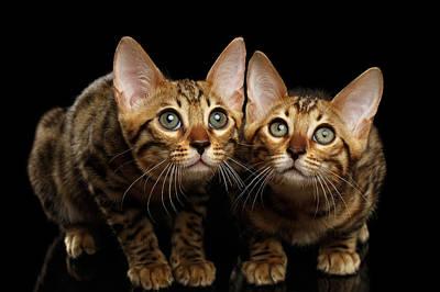 Kitties Art