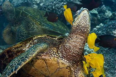 Cleaning Sea Shells Prints