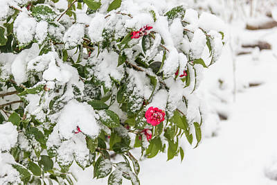 Designs Similar to Winter In Spring Camellia Bloom