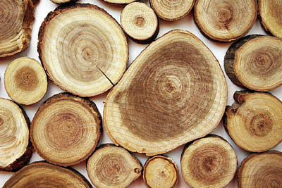 Designs Similar to Wood Slices- Art By Linda Woods