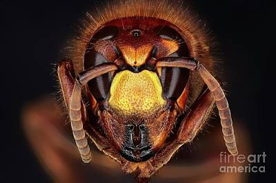 Designs Similar to Head Of A Hornet