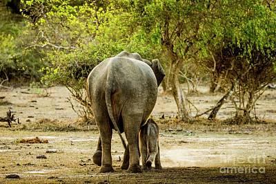 Designs Similar to Sri Lankan Elephants