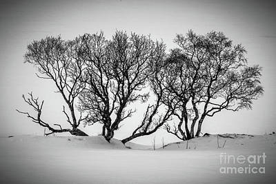 Designs Similar to Winter Trees by Inge Johnsson