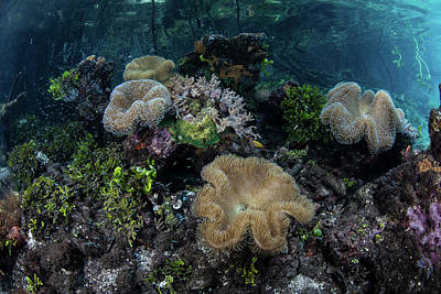 Designs Similar to A Beautiful Coral Reef Grows