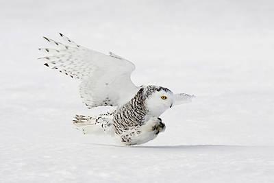 Designs Similar to Snowy Owl by James Zipp