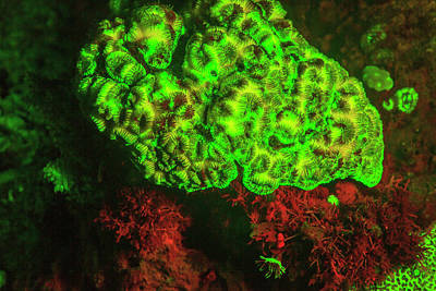 Designs Similar to Natural Occurring Fluorescence