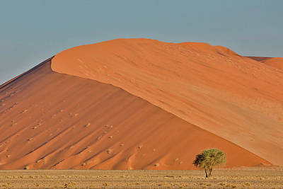 Designs Similar to Lone Tree And Tall Sand Dune