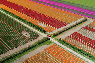Designs Similar to Aerial Of Colorful Tulip Fields