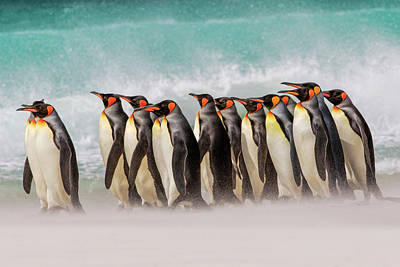 Designs Similar to Group Of King Penguins On Beach