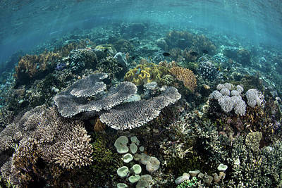 Designs Similar to A Beautiful Coral Reef Thrives