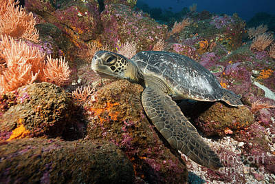 Designs Similar to Green Sea Turtle
