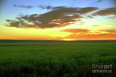 Designs Similar to A Field At Sunset by Jeff Swan