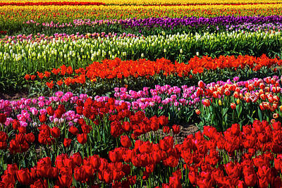 Designs Similar to Abundance Of Beautiful Tulips