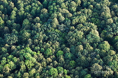 Designs Similar to Aerial View Of  Forest