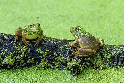 Designs Similar to American Bullfrogs Lithobates