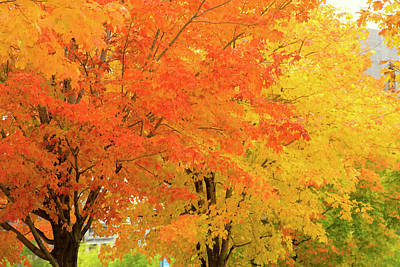 Designs Similar to Autumn Trees In City Park