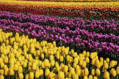 Designs Similar to Beauteous Tulip Fields