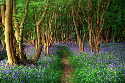 Designs Similar to Bluebells In Sussex