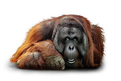 Designs Similar to Bornean Orangutan Named Michael