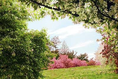Designs Similar to Daffodil Hill Delight
