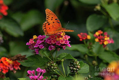 Designs Similar to Butterfly On Lantana