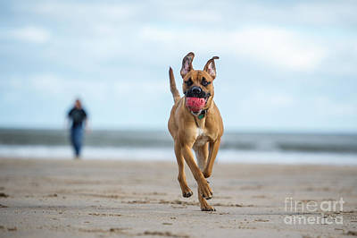 Designs Similar to Dog On The Beach