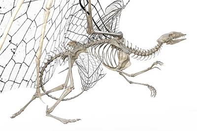 Designs Similar to Dragon Skeleton  by Betsy Knapp